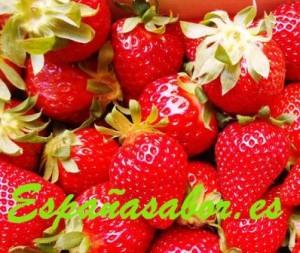 fresas-españasabor01